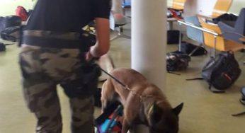 Fronton. gendarmes et chiens spécialisés ont fouillé le lycée à la recherche de drogue
