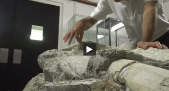 Un mystérieux crâne préhistorique étudié au Muséum de Toulouse