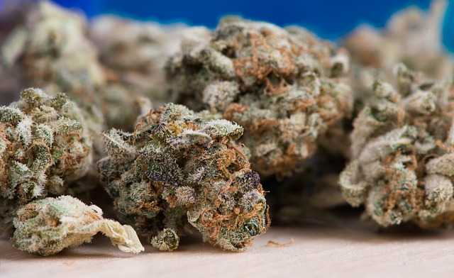 Saisie de 2 tonnes de cannabis à Bourges-Vierzon