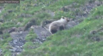 à 9 ans, il filme un ours en Ariège