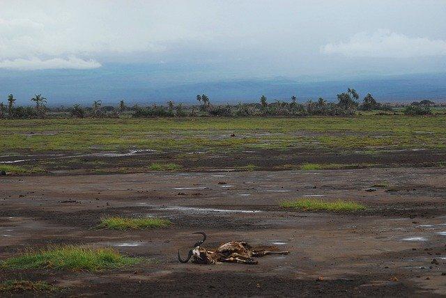 La faim aiguë devrait monter en flèche dans plus de 20 pays au cours des prochains mois en l'absence d'une assistance accrue immédiate, préviennent l'Organisation des Nations Unies pour l'alimentation et l'agriculture (FAO) et le Programme alimentaire mondial (PAM) dans un nouveau rapport publié mardi. Le Yémen, le Soudan du Sud et le nord du Nigéria sont notamment confrontés à des niveaux catastrophiques de faim aiguë, avec des familles déjà en proie à la famine ou risquant de mourir de faim dans quelques endroits du Soudan du Sud et du Yémen, selon le rapport intitulé Hunger Hotspots. Au Burkina Faso, la sécurité alimentaire s'est légèrement améliorée depuis octobre dernier, mais la situation reste très préoccupante, note le rapport. La majorité des pays touchés se trouvent en Afrique. C'est le cas de la République démocratique du Congo, de l'Ethiopie et du Soudan. Mais la faim aiguë devrait aussi augmenter fortement dans d'autres régions du monde, comme en Afghanistan, en Haïti, et en Syrie. A travers le monde, plus de 34 millions de personnes sont déjà aux prises avec des niveaux d'urgence de faim aiguë, ce qui signifie qu'elles sont au bord de la famine. « L'ampleur des souffrances est alarmante. Il nous incombe à tous d'agir maintenant et d'agir rapidement pour sauver des vies, sauvegarder les moyens de subsistance et éviter le pire », a déclaré le Directeur général de la FAO, Qu Dongyu. « Dans de nombreuses régions, la saison des semis vient de commencer ou est sur le point de commencer. Nous devons mener une course contre la montre et ne pas laisser passer cette opportunité de protéger, stabiliser et même éventuellement augmenter la production alimentaire locale », a-t-il ajouté. Le Directeur exécutif du PAM, David Beasley, a dénoncé une catastrophe qui se déroule « sous nos yeux ». « La famine - provoquée par les conflits et alimentée par les chocs climatiques et la crise de Covid-19 - frappe à la porte de millions de familles », a-t-il déclaré. « Nous avon