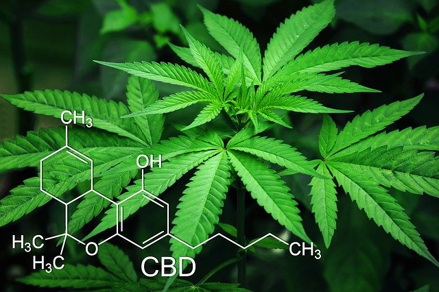 à Toulouse, des chercheurs travaillent sur le cannabis thérapeutique