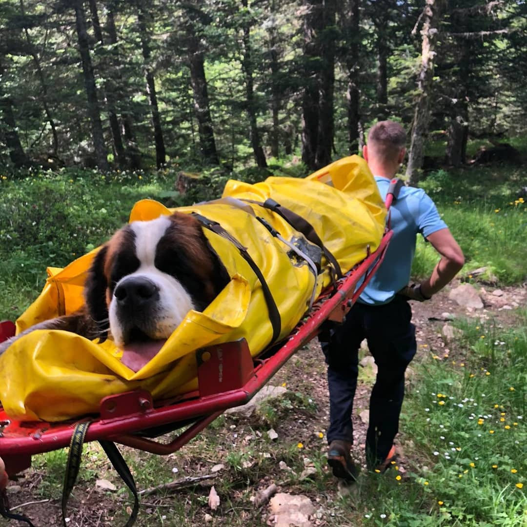 Insolite - les gendarmes sauvent un chien de 75 kilos dans les Pyrénées Ariégeoises