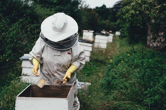 abeilles année noire apicultures