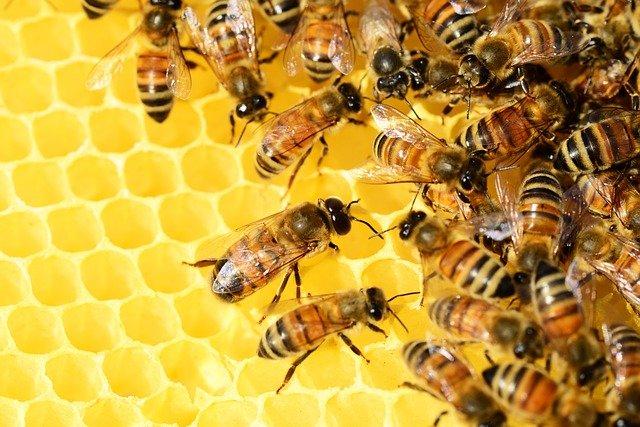 Dunkerque : un médecin urgentiste installe des ruches sur le toit de l'hôpital