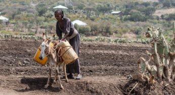 Des centaines de milliers de réfugiés fuient la guerre au Nord de l'Ethiopie