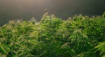 Saisie exceptionnelle de 4,2 tonnes de résine de cannabis en Méditerranée