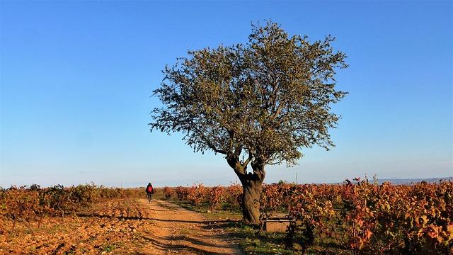 Un nouveau Parc naturel régional en Occitanie
